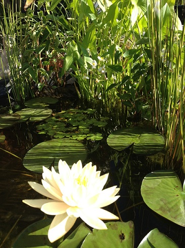 Balanced Pond