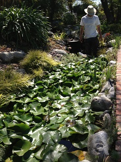 Van ness water garden pond cleaning for Small pond maintenance
